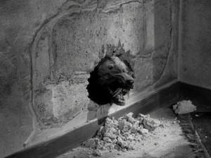 shrew eating through wall